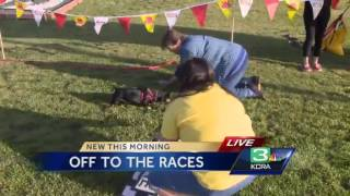 Sleep Train Arena To Host Wiener Dog Races