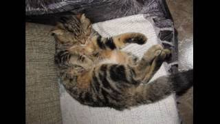 Лучшие позы для сна от кота Василия (The best sleeping poses by the cat Vasiliy)
