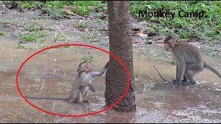 rip pity baby monkey got accident baby monkey cry when baby monkey still alive monkey camp