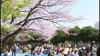 「世田谷地域記録映像」春夏秋冬 FOUR SEASONS 〜SETAGAYA DISTRICT〜(予告編)