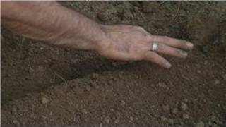 Using Soil : How to Prepare Soil for Sweet Corn