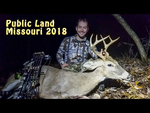 Missouri Public Land Buck - National Forest