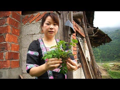 农村姑娘竟然在屋边挖出这种野菜根加入红烧肉中,炒出的味道绝了