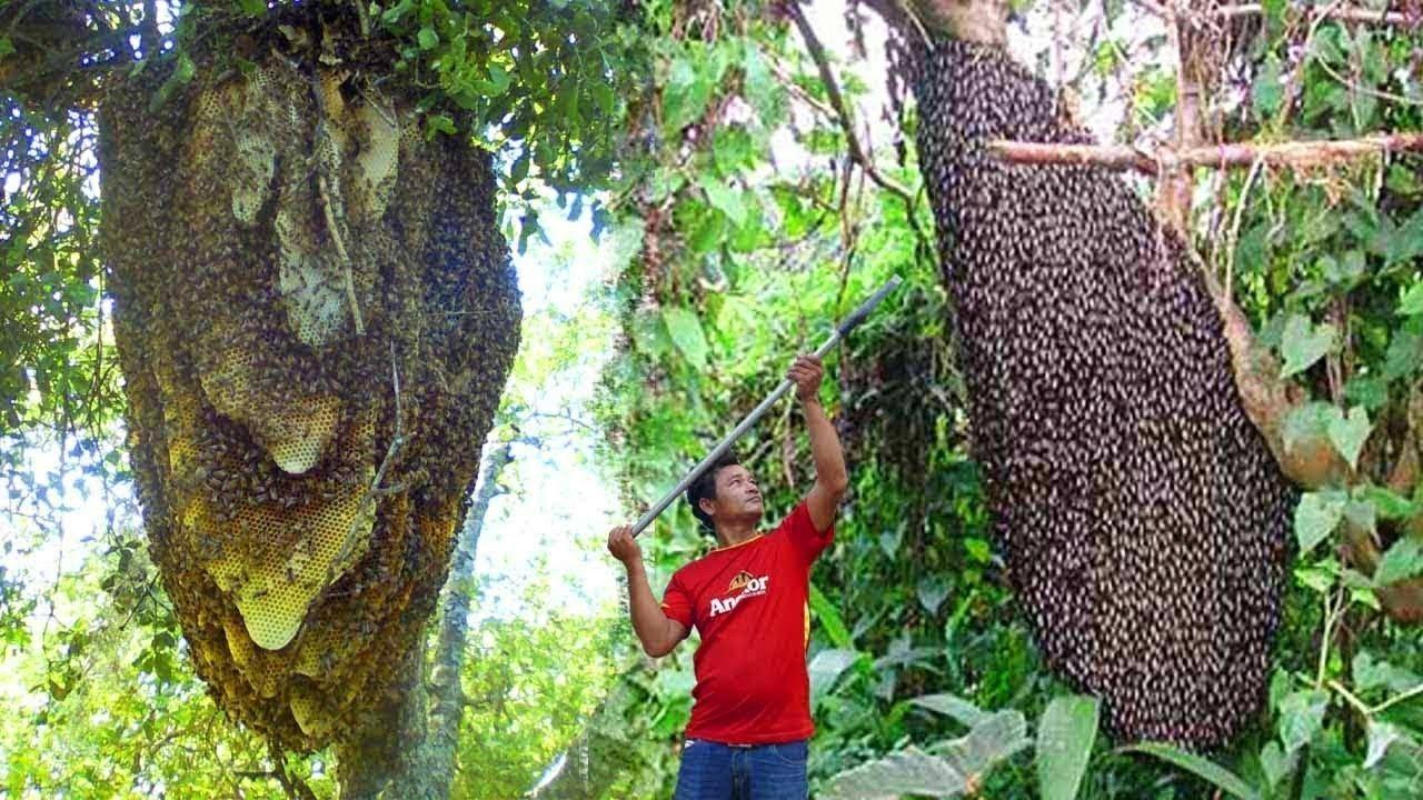 দেখুন মধু বানানোর জন্য মৌমাছিদের কি কি করতে হয়- অবাক করা তথ্য | How Do Bees Make Honey in Bangla