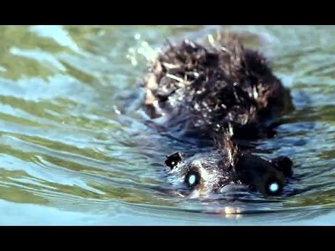 zombeavers free full movie