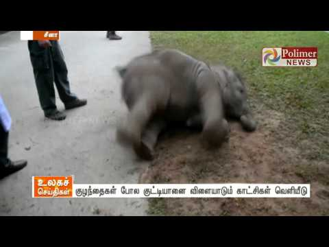 Elephant found playing with fun like a kid - video released by care taker | Polimer News