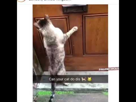 "Cat knocking on the door saying ""hello?"""