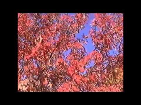Красновишерск сентябрь