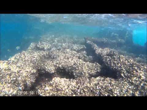 Snorkelling at Moreton Islands wrecks
