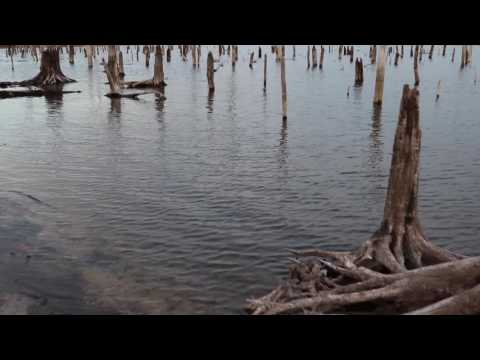 Footage of the Manasquan Reservoir in New Jersey