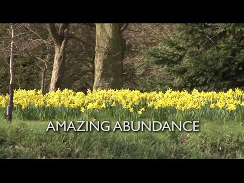 Bishop Stephen's Easter video blog 2015