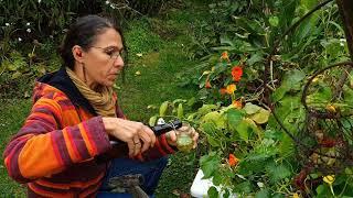 Wildkräuter kreativ verwenden - Pesto