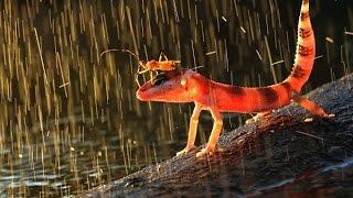 rain with lightning sound effects - efek suara hujan dan petir #2