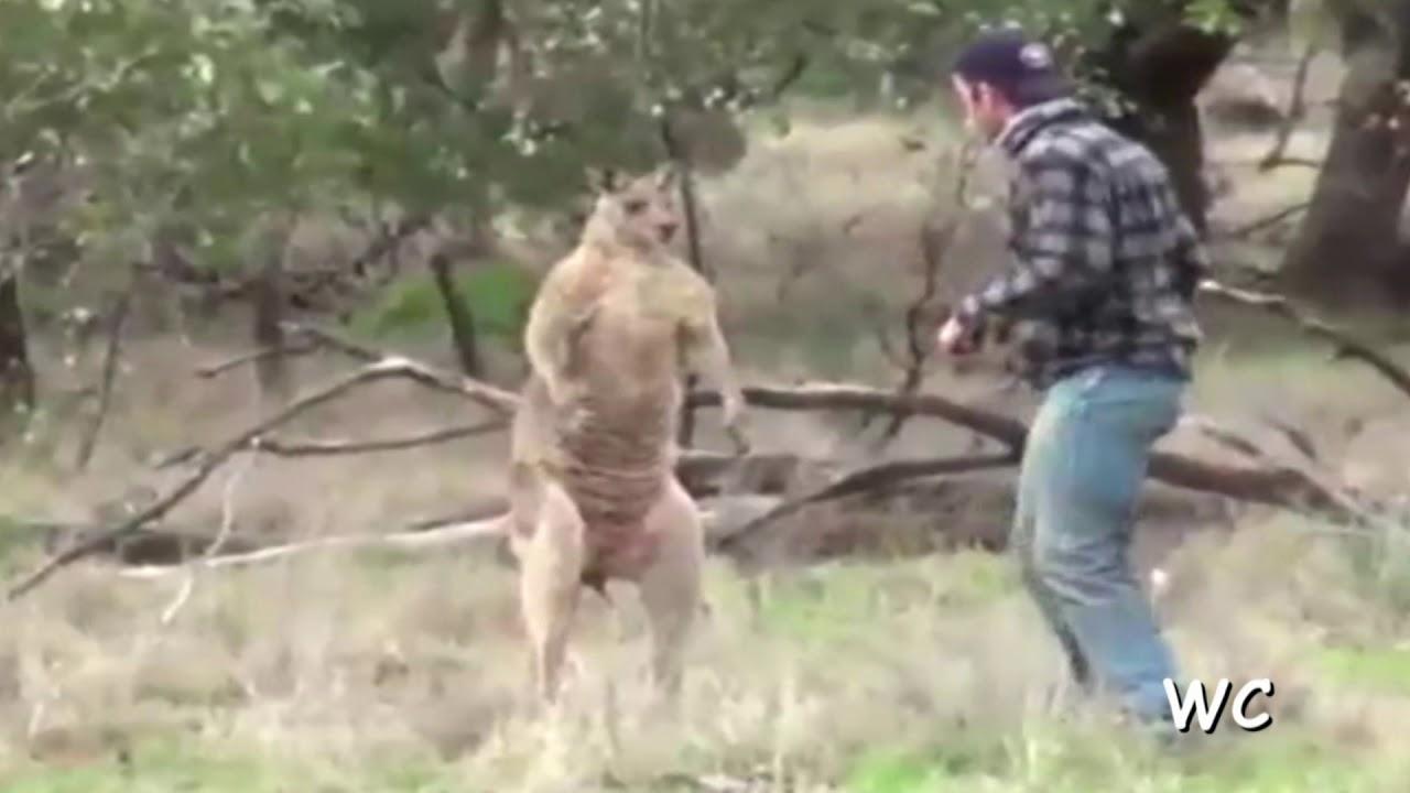 Känguru Boxen