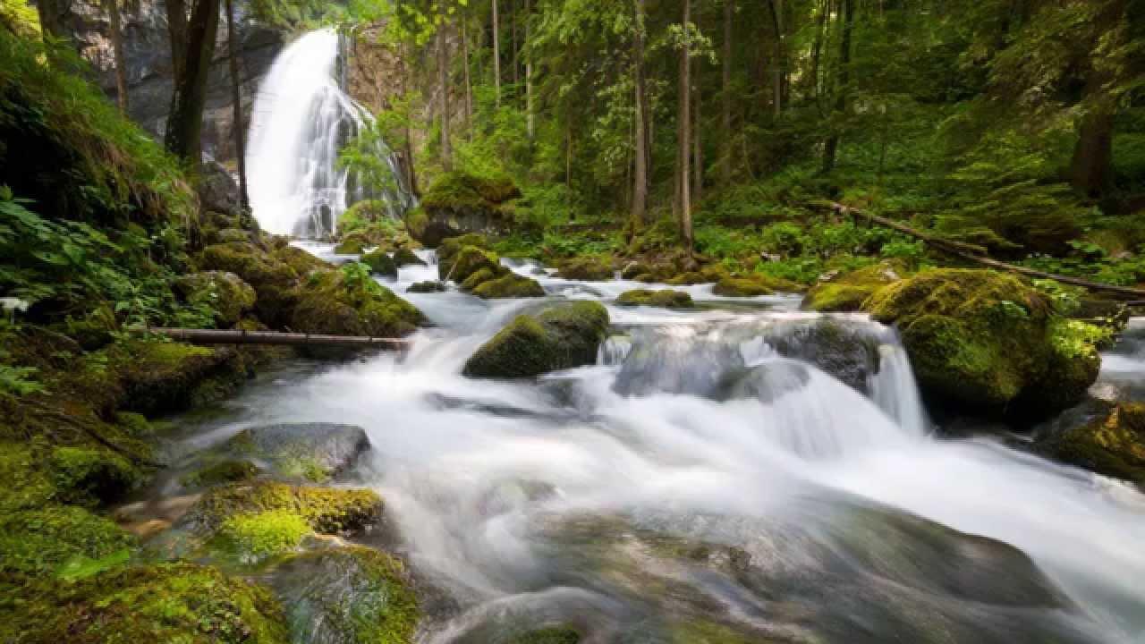 Скачать звук живой природы