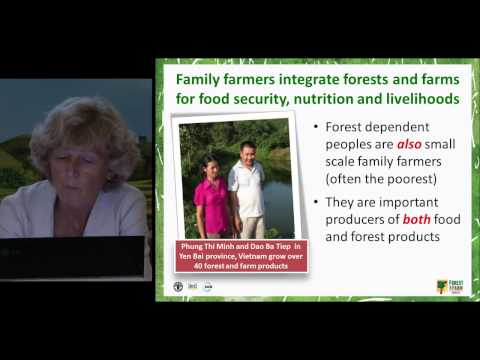 Eva Müller, Director, Forest Economics, Policy and Products Division, FAO Forestry Department