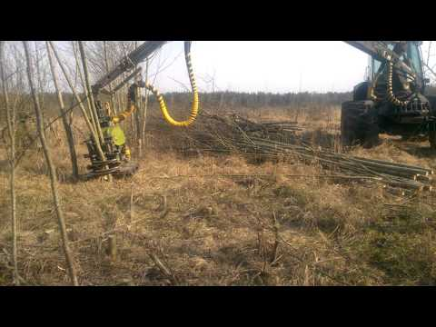Timberjack ir Bracke C16 giljotina