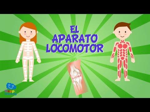 EL APARATO LOCOMOTOR | Vídeos Educativos para Niños
