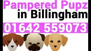 Dog Groomers Billingham | Dog Grooming by Pampered Pupz in Billingham