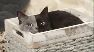 """Голубоглазая кошка """"с двумя мордами"""", которая стала звездой Интернета"""