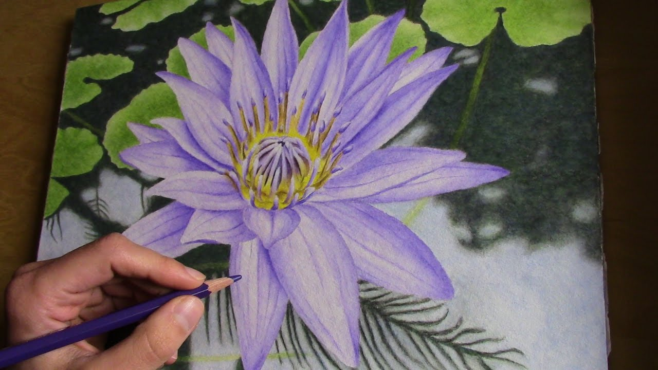 Drawing A Water Lily With Watercolor Pencils Youtube