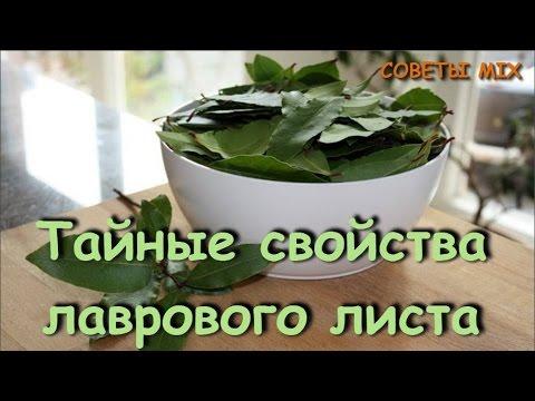 Лавровый лист: лечебные свойства, применение в народной