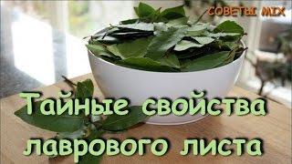 Лавровый лист и его уникальные полезные свойства: Целебные рецепты ларового листа
