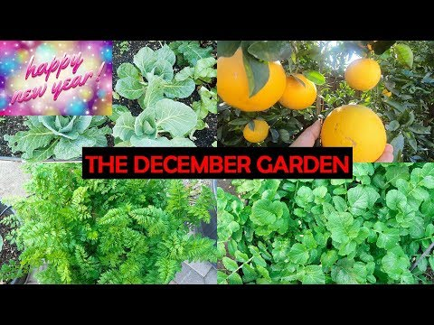 Happy New Year! A Tour Of Our December California Garden! Happy Holidays!
