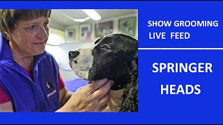LIVE FEED  HEAD  GROOMING  ENGLISH SPRINGER SPANEIL