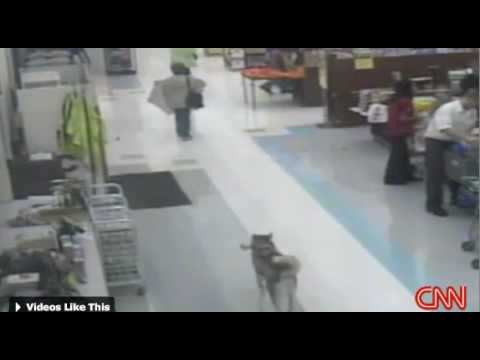 Dog Steals Bone From Grocery Store