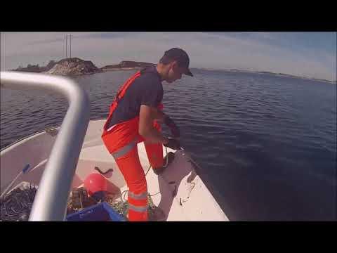 Krabbefiske i Øygarden 2018