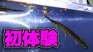 古代魚ガーの初体験!〇〇の餌をあげてみた!
