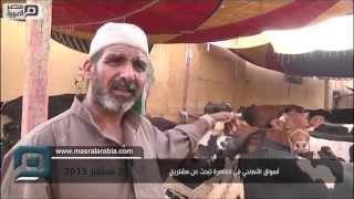 مصر العربية   أسواق الأضاحي في القاهرة تبحث عن مشترين