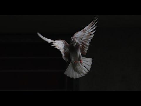 Sunday, 23 May: Pentecost