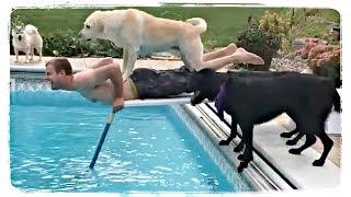 ТЫ ДОЛЖЕН КУПАТЬСЯ, приколы с животными подборка | Funny Animals Compiilation #647