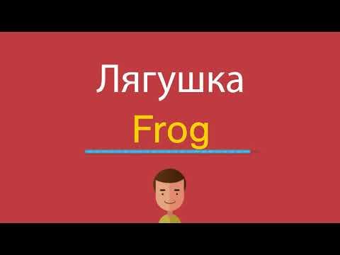 Как по английски будет лягушка