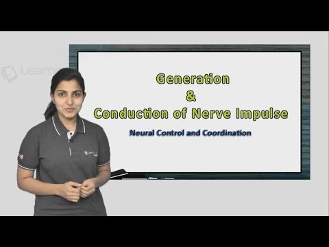 Know more about Generation and Conduction of Nerve Impulse. NEET Zoology XI