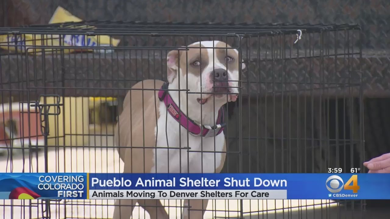 Pueblo Shelter Closes Leaving 100+ Animals Without Shelter