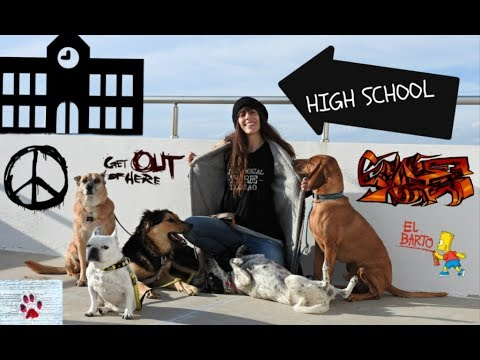 If my dogs were high school students