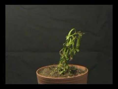 Plant Dying Time Lapse Youtube
