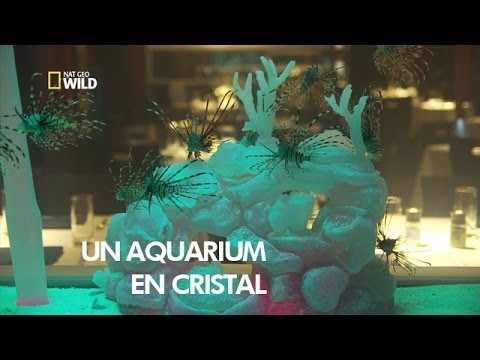 Un aquarium unique