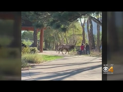 Warning About Getting Too Close to Wild Animals After Elk Attack