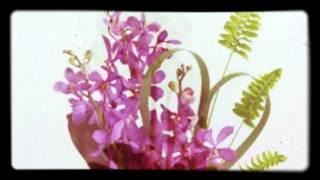 Доставка цветов по Астане! Быстрая Доставка цветов.(, 2015-02-27T12:01:37.000Z)