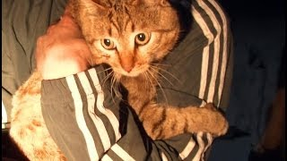 Во время пожара кошки спасли хозяина.MestoproTV