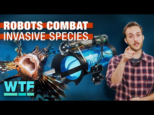 Robots are fighting invasive species | What The Future