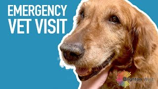 VLOG: Time to go to the emergency vet with Rowan