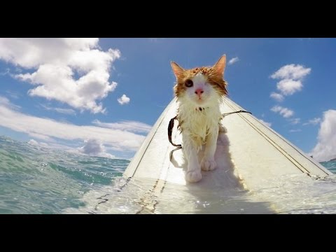 Funny Cats in Water Compilation 2016