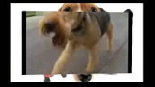Эрдельтерьер. Все породы собак. 101 dogs. 101 догс