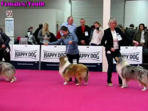 Dog Show Nitra 15.01.2017 ROUGH COLLIES - females [2of2]