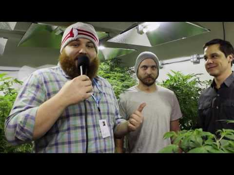Matt Fernandez Takes a Tour of the Goldfinch Cannabis Grow House